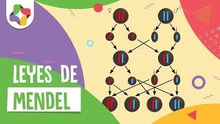 Ciencias - Las leyes de Mendel
