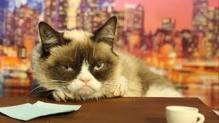 Grumpy Cat Auditions To Replace David Letterman Mashable