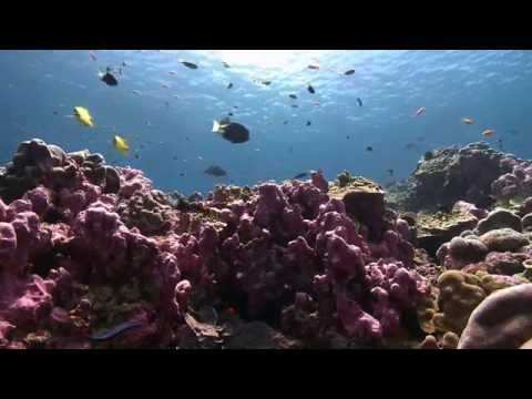 The Phoenix Islands Protected Area: A Model For Recovery