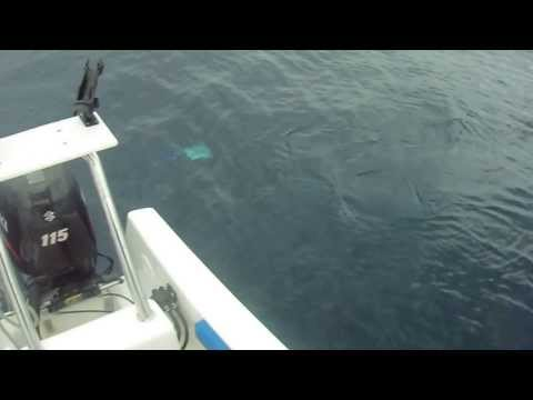 tex (ian bussell) fishing solomon islands