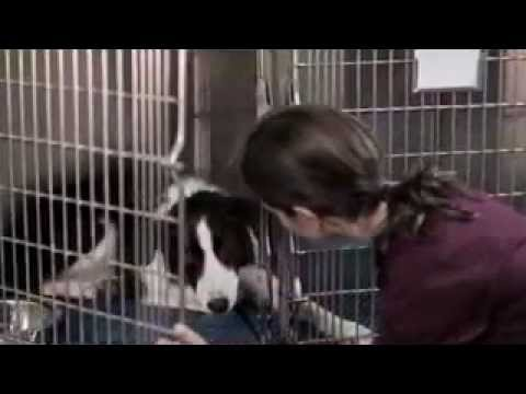 Angel Dog (2011) Trailer