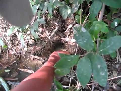 câu lươn  Thegioicauca com   PhuccoR