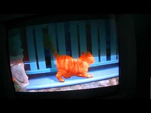 Garfield the movie part