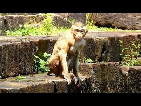 Very Very funny monkey!! Poor little monkey Rose looks so cool, Both of them loving water so much
