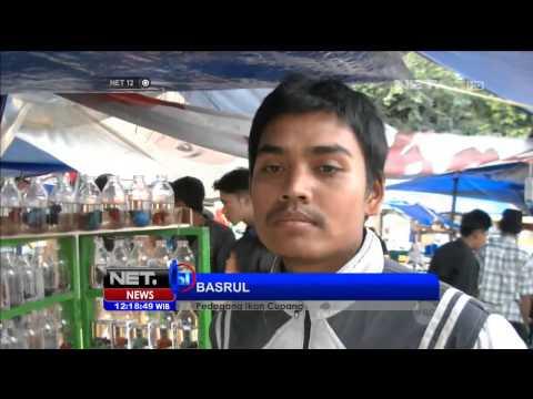Ngabuburit dengan mengadu ikan cupang di Sukabumi - NET12