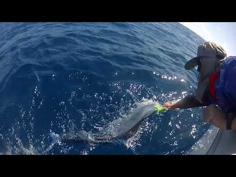 Cairns marlin action
