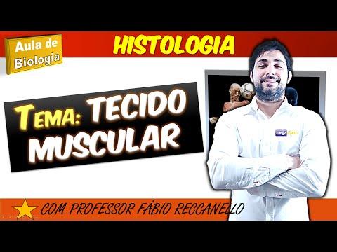 Tecido muscular - aula completa! (megaaluno.com)