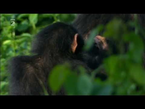 Súkromný život primátov