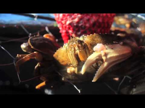 Oregon Coast Crabbing with Phillips Seafoods