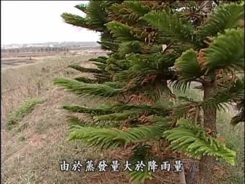 我們的島 第246集 水的代價 (2004-03-22) - YouTube