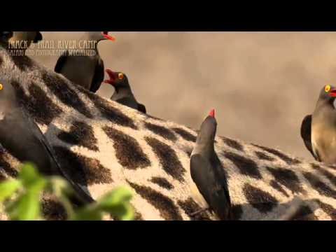 Visit Zambia - Brought to you by Tour Advisor TV