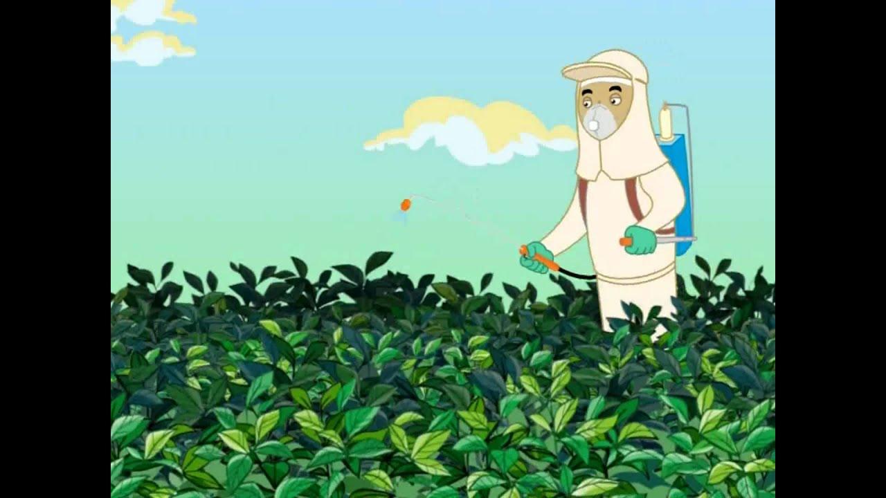  Curiosidades  ANDEF - Uso correto e seguro de defensivos agrícolas.