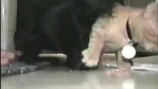 犬にはエサを渡さない猫