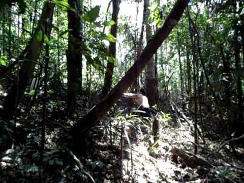 Índio caçando na floresta amazônica