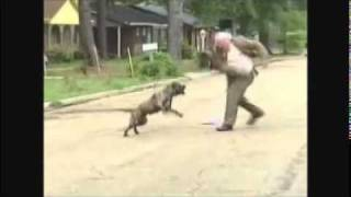 Pastor se enfrenta a pitbull furioso