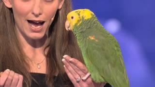 Hayvan taklidi yapan papağan