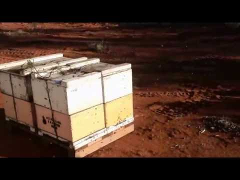 Apicultura De Punta - Beekeeping tip for Entrepreneurs- Organic Honey Producer- OUTBACK HONEY
