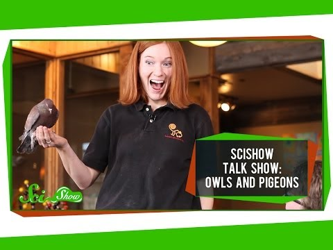 Talk Show: Owls and Pigeons