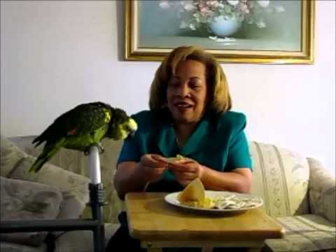 Abba the Parrot Eats Hummus juice veggies health