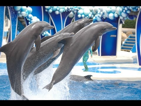 "♥♥ SeaWorld's ""Blue Horizons"" Dolphin Show (in HD)"