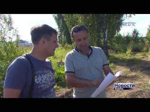 Без разрешения срубили березы на стройке в бердском микрорайоне Южный