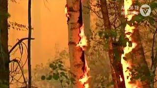 Внимание! В лесу установился пожароопасный период
