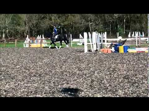 15.2hh 8yo Mare - Sky. Flat work and jumping at home