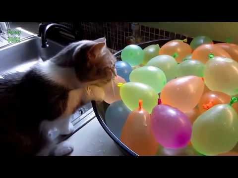 Funny Cats and Balloons Compilation 2020