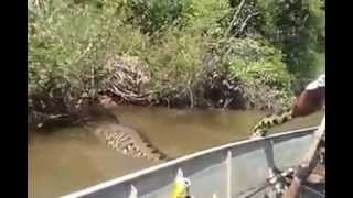 Anaconda The Largest Snake In The World Anaconda A Maior