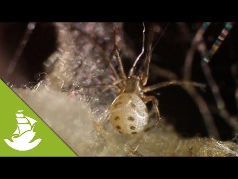 killers spiders