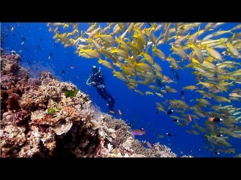 Diving the Ribbon Reefs on Australia's Great Barrier Reef (June 2011)