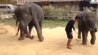 Gangnam style song dance by Elephants