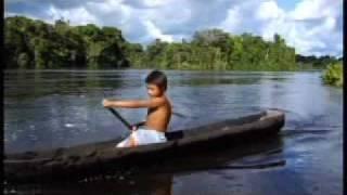 Raio-X Da Amazônia