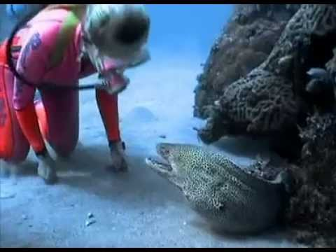 Valerie Taylor Befriends a Spotted Moray Eel