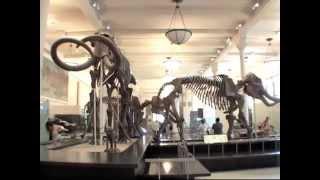 American Museum Of Natural History In New York Dinosaur