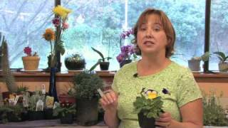 Flower Gardening Tips : How To Grow Pansy/Viola (Viola