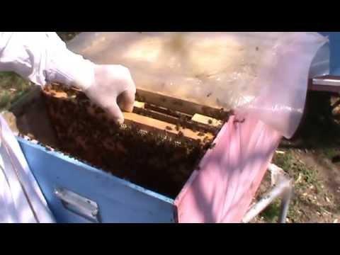 Largirea cuibului   Problema familie de albine besmeticita   Lucrari stupina   Apicultura incepatori