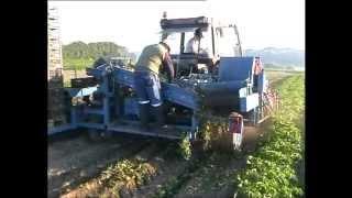KT-100 Kartoffeloptager