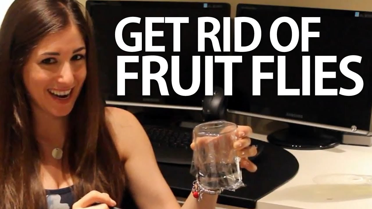how to get rid of fruit flies easy household cleaning ideas clean my space youtube. Black Bedroom Furniture Sets. Home Design Ideas