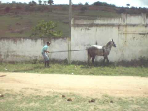 DOMA RACIONAL DE CAVALO MANGALARGA - CHARRETEAMENTO - BIMBA XAMÊGO