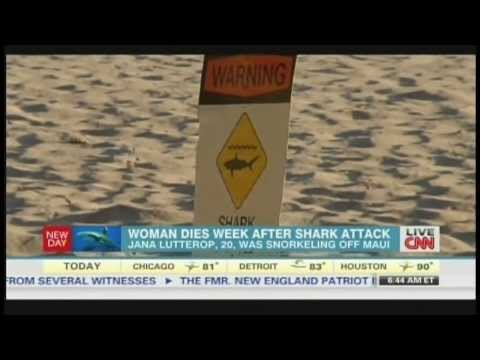 Shark attacks up in Hawaii, German woman dies one week after losing arm (August 22, 2013)