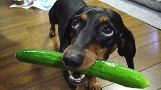 If these DOGS won't make you LAUGH, NOTHING will - FUNNY dog compilation