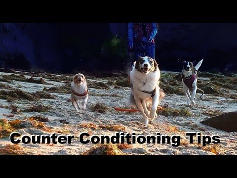 Dog Training Tip of the Day- Counter Conditioning- clicker dog training