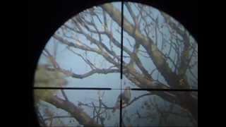 Caceria Con Aire Comprimido-2