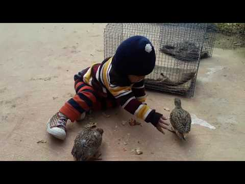 Funny Birds Trolling Babies and Kids