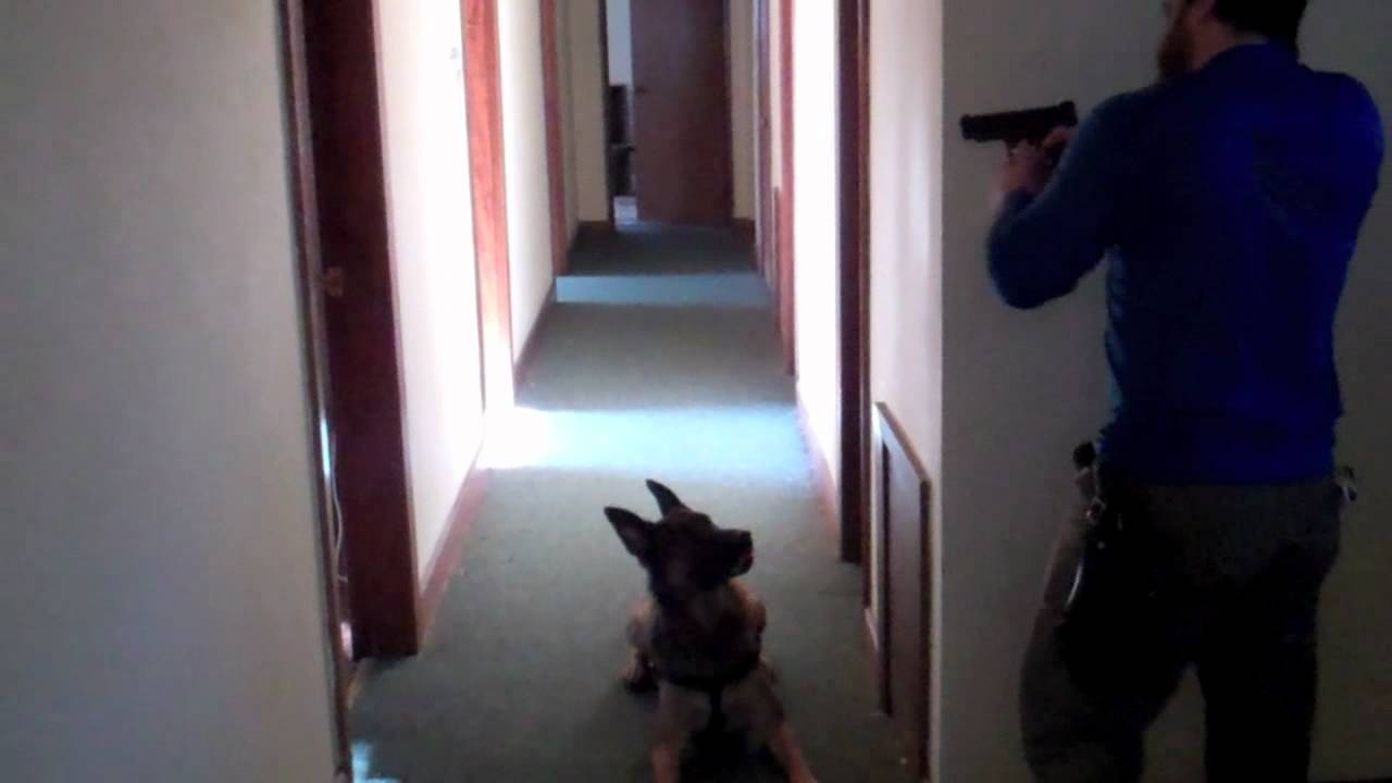 Canine tactical building search or home protection for How to find a good home builder