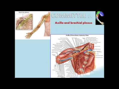 YEDITEPE MEDICAL SCHOOL PHASE I ANATOMY IN 4 MIN.