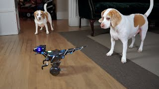 Dog Rescues Sister from Dinosaur Robot: Cute Dogs Maymo & Penny