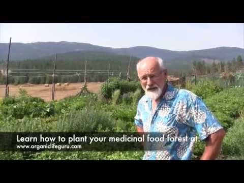 Tour a Food Forest 4 Months After Planting | Full Course at Organic Life Guru