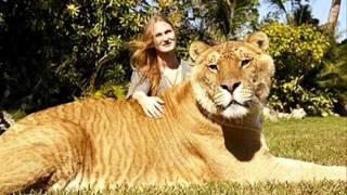 World Biggest Animals Video